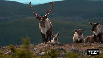 Gas_caribou_video_decouverte.jpg